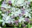 ZUII Dekorative Bio-Kosmetik aus Blumen