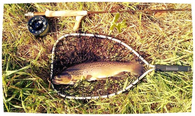 Um erfolgreich zu sein und so einen schönen Fisch zu fangen, braucht es einiges an Erfahrung.