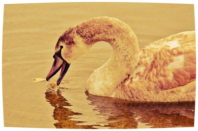 Dort wo Vögel mit Brot gefüttert werden, beißen nicht selten auch die Fische gerne auf Brot.