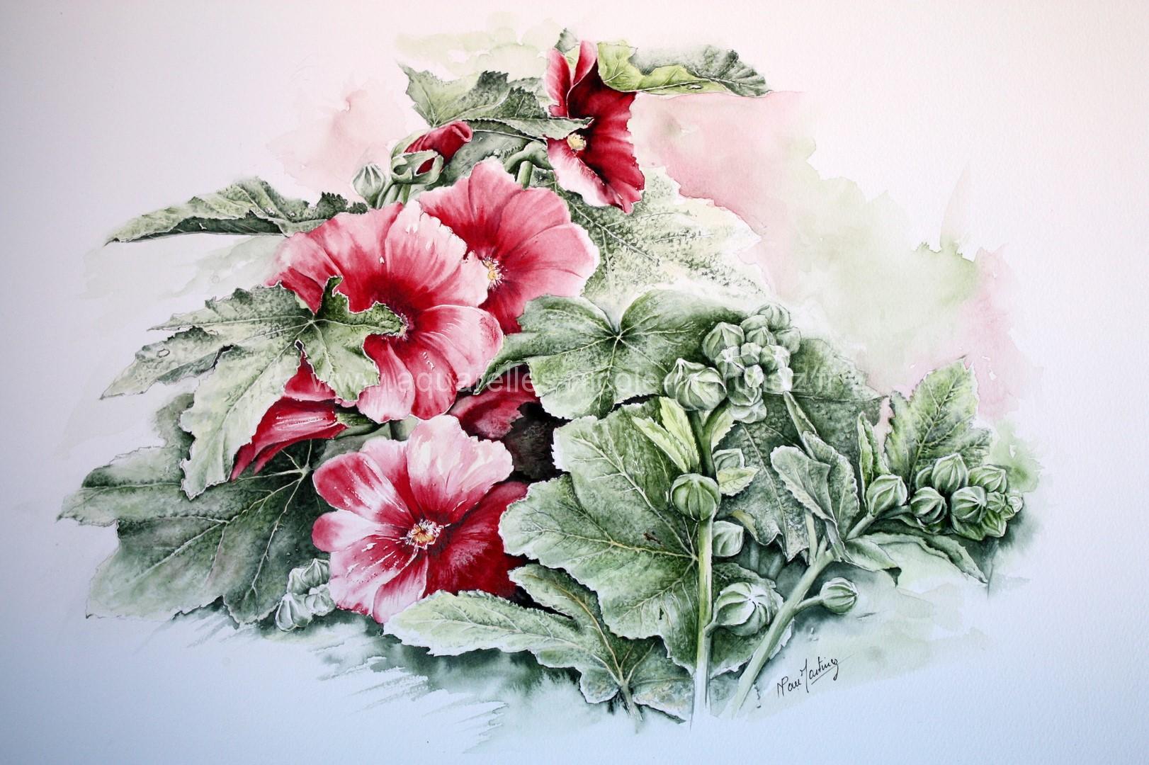 Fleurs site aquarelles nicole martinez for Site de fleurs