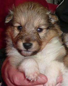 Little Addison Moira mit 4 Wochen