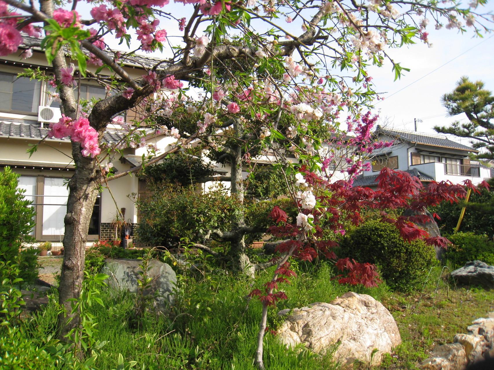 普通のお宅の庭