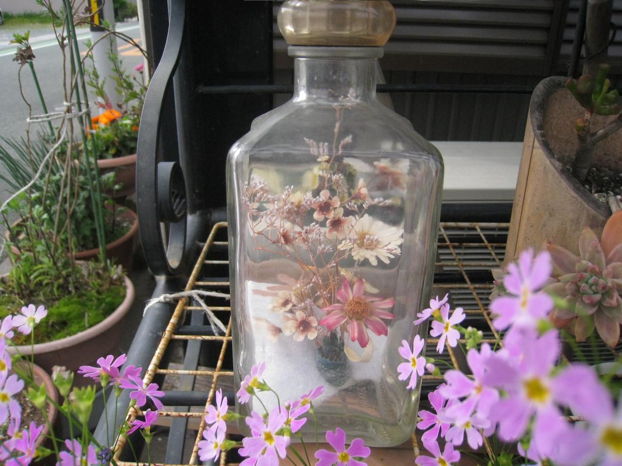 軒先の草花
