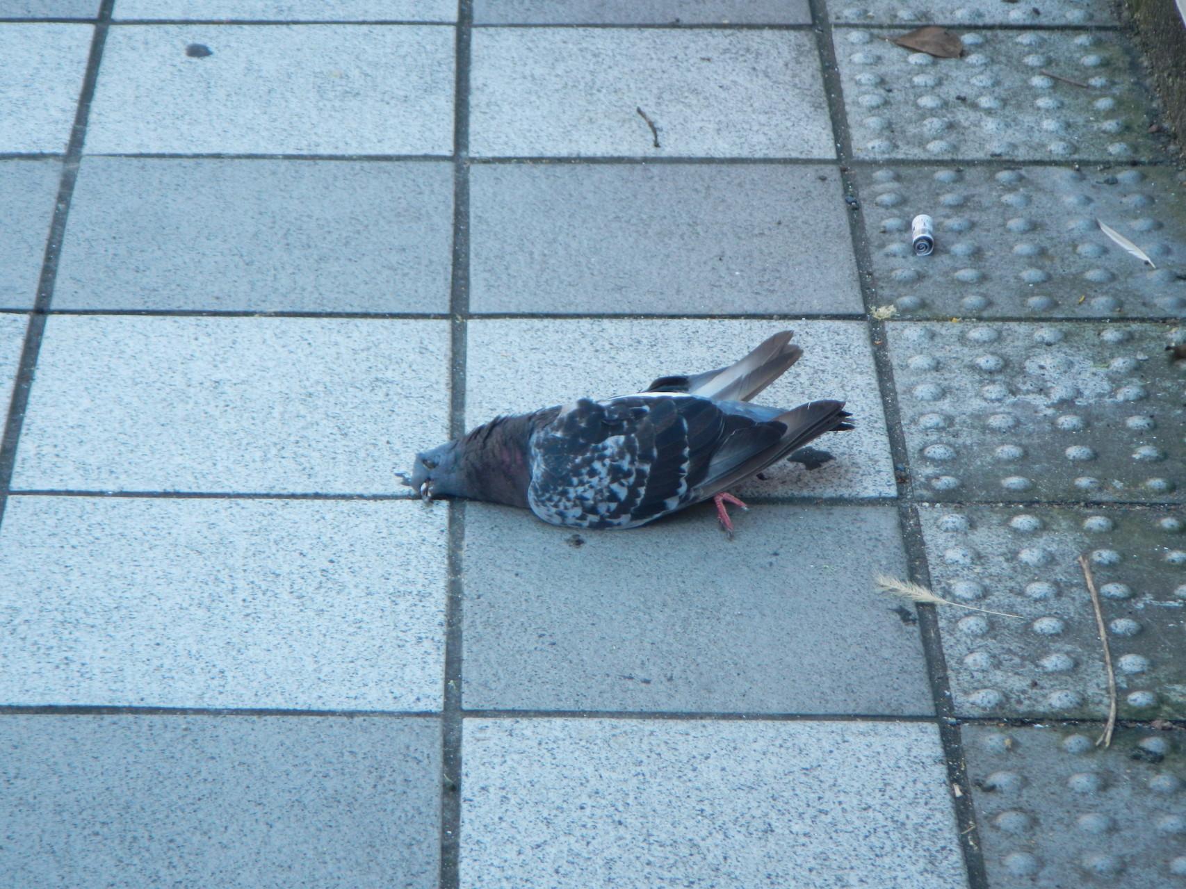 鳥インフルエンザ?