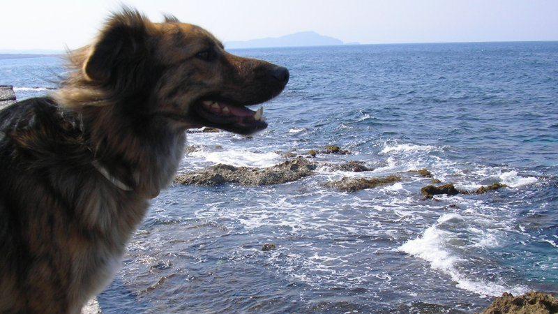 Hund Filos vom DipthDesign Team