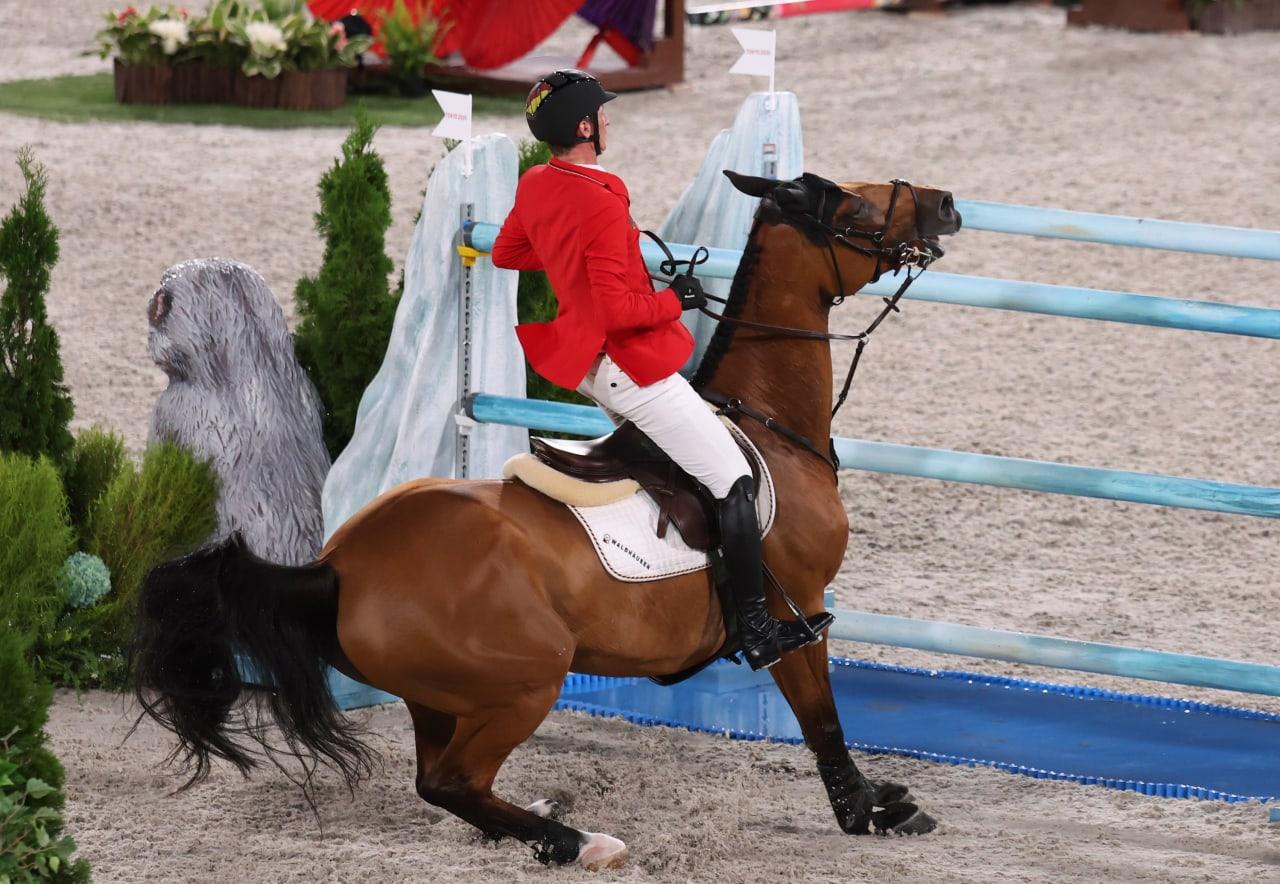 Springen Pferde wirklich gerne über Hindernisse?