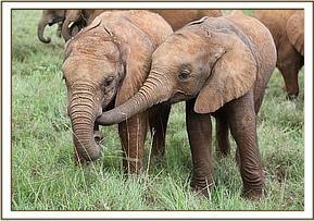 Unser Patenfant Quanza (rechts) mit ihrem Freund Narok
