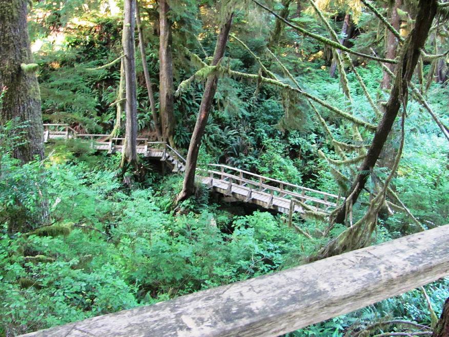 Pacific Rim National Park Reserve  / Schooner Trail Image