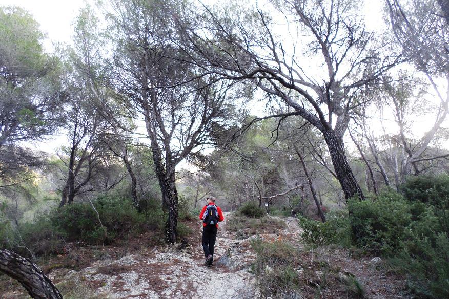 Montée dans un belle forêt de pins