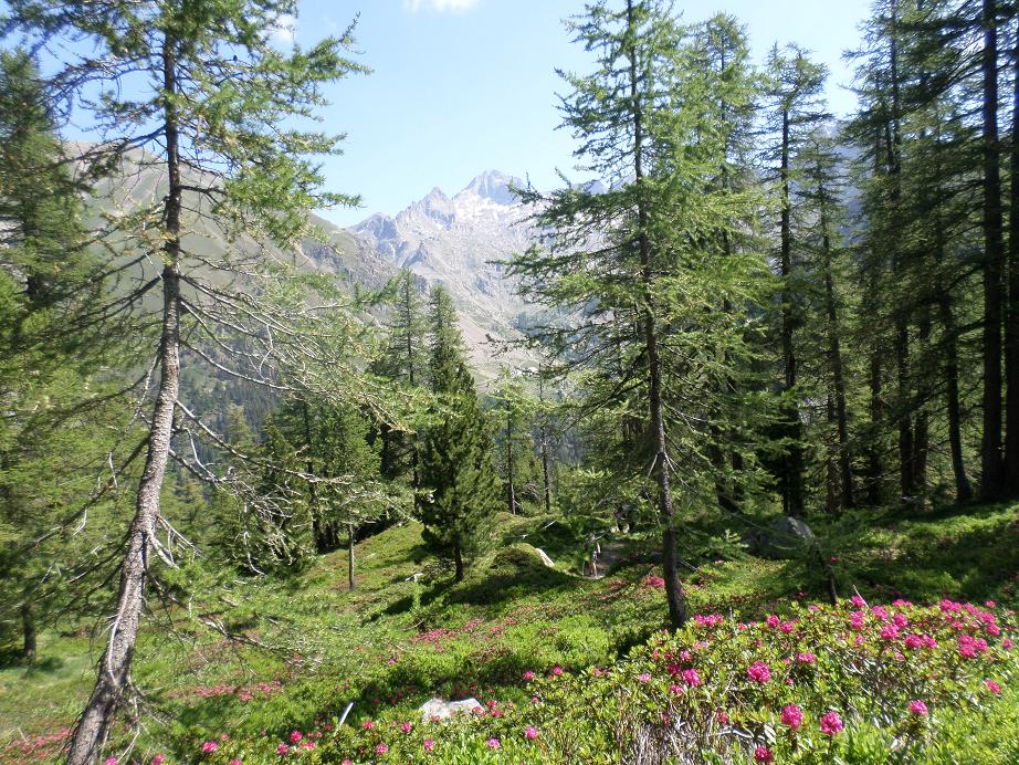 Le Gélas (3143 m), au centre, reconnaissable à sa petite fourche