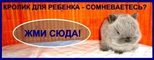 питомник карликовых кроликов