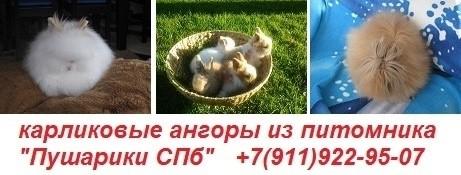 питомник-кроликов-пушарики