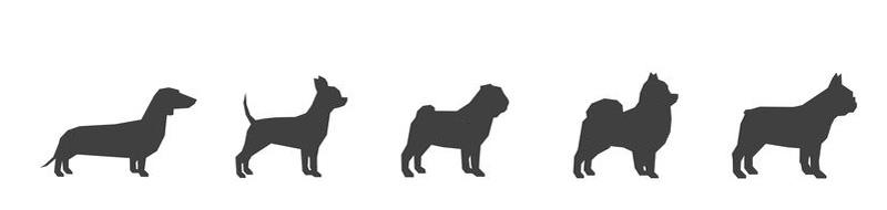 Kotgreifer für kleine Hunderassen