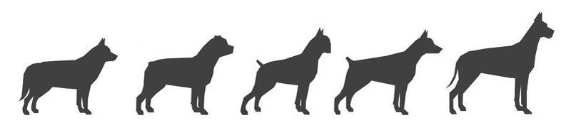 Kotgreifer für große Hunderassen