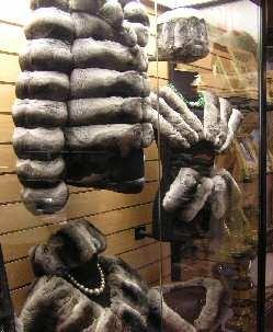 Pieles de chinchilla doméstica empleadas en peletería, en este caso, en la Argentina.