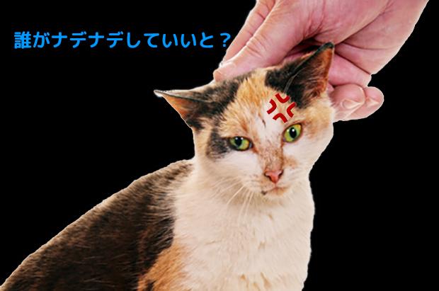 猫ちゃん、さっきまでノドを鳴らして気持ち良さそうにしていたのに、突然引っ掻くなんて、、