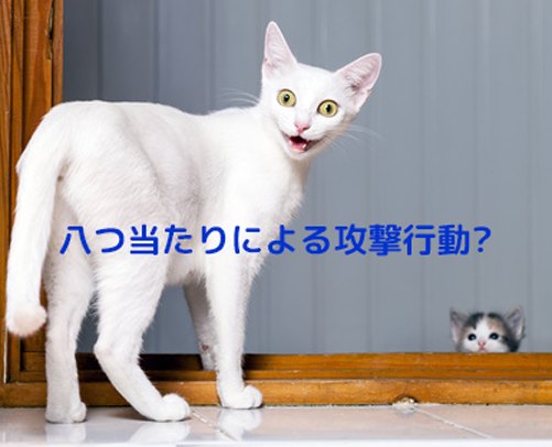 愛猫が突然何かに驚いて攻撃してくることもあります。八つ当たり。。