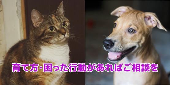 猫のしつけ相談、犬のしつけ相談