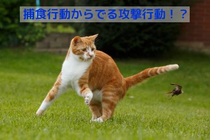 猫の本能である捕食(狩猟)行動を満たして攻撃行動を減らしましょう