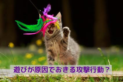 愛猫と上手に遊んでいますか?
