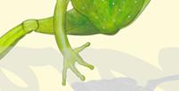Postkarte Detail: Frosch mia und seine Freunde die Nashörner / kängorooh / 2020