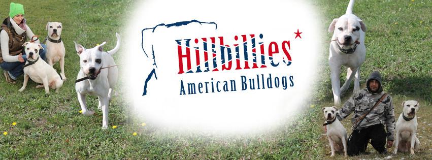 Hillbillies American Bulldogs | Hundezucht