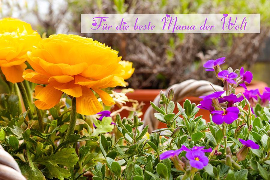 """Für die beste Mama der Welt ♥ Grußkarte-""""Muttertag"""" mit wunderschöner aufgeblühter Ranunkel und Blaukissen © Jutta M. Jenning ♦ www.mjpics.de"""