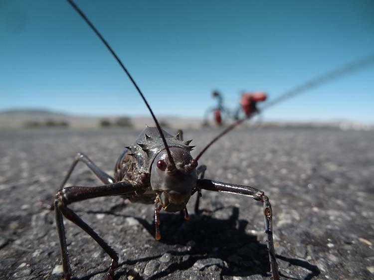 Eine Panzergrille ist seine einzige Bekanntschaft an diesem Tag in Namibia / Foto: Anselm Pahnke