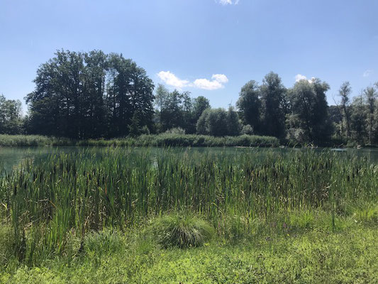 Blick über die Reuss im Naturschutzgebiet Flachsee, Kanton Aargau