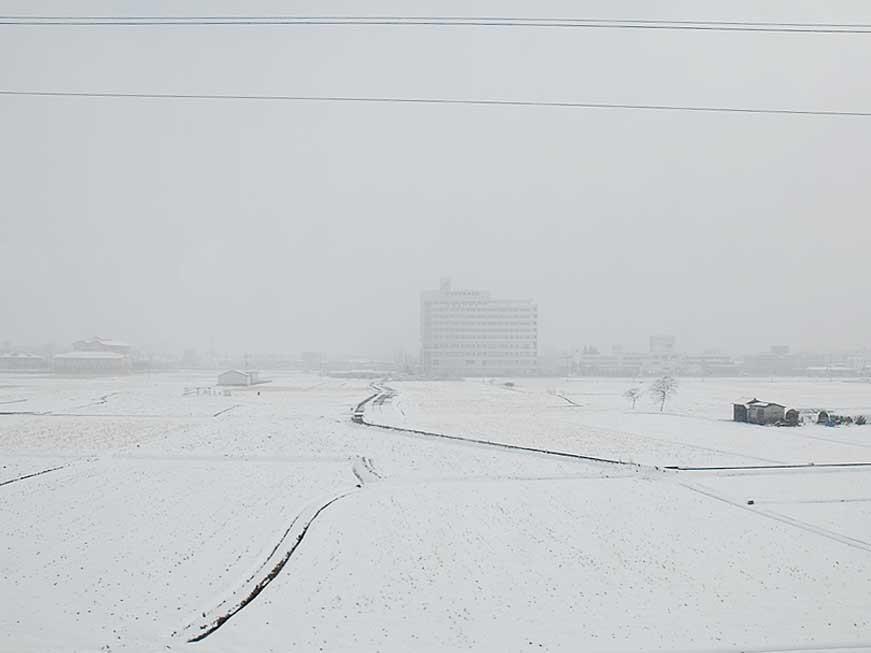 吹雪のような景色に。