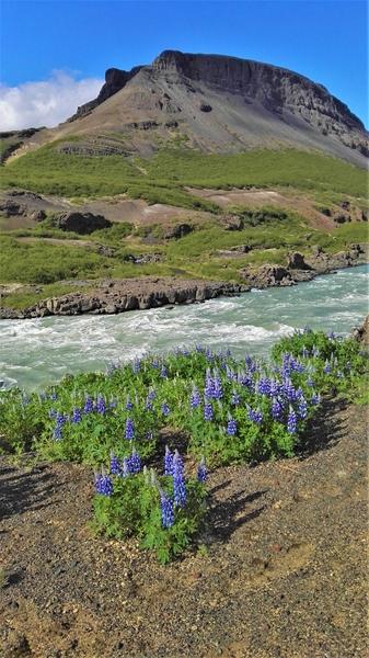 Fluss Þjórsá