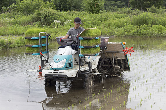 田植えの前の水管理が大事なポイント。水の量が多すぎるとしっかりと植わらずに「浮き苗」になってしまう。適切な水の量にするためには、やはり荒起こしと代かきが重要。それでも状況は現場によるため、植える深さを変えたり、田植え機を走らせるスピードを調整したりと臨機応変に対応している。