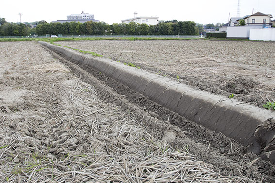 荒起こし前の田んぼ。この後、昨年刈り取られた稲わらが土にすき込まれて養分となっていく。
