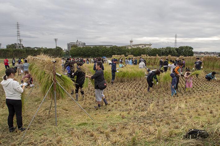 約200人いるので、広い田んぼの収穫もあっという間。