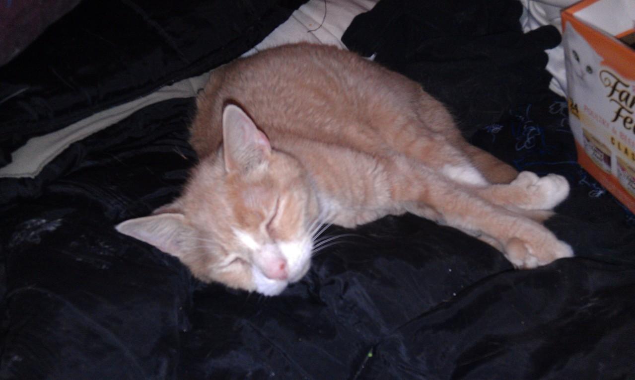 Wide awake, coiled spring of feline energy.