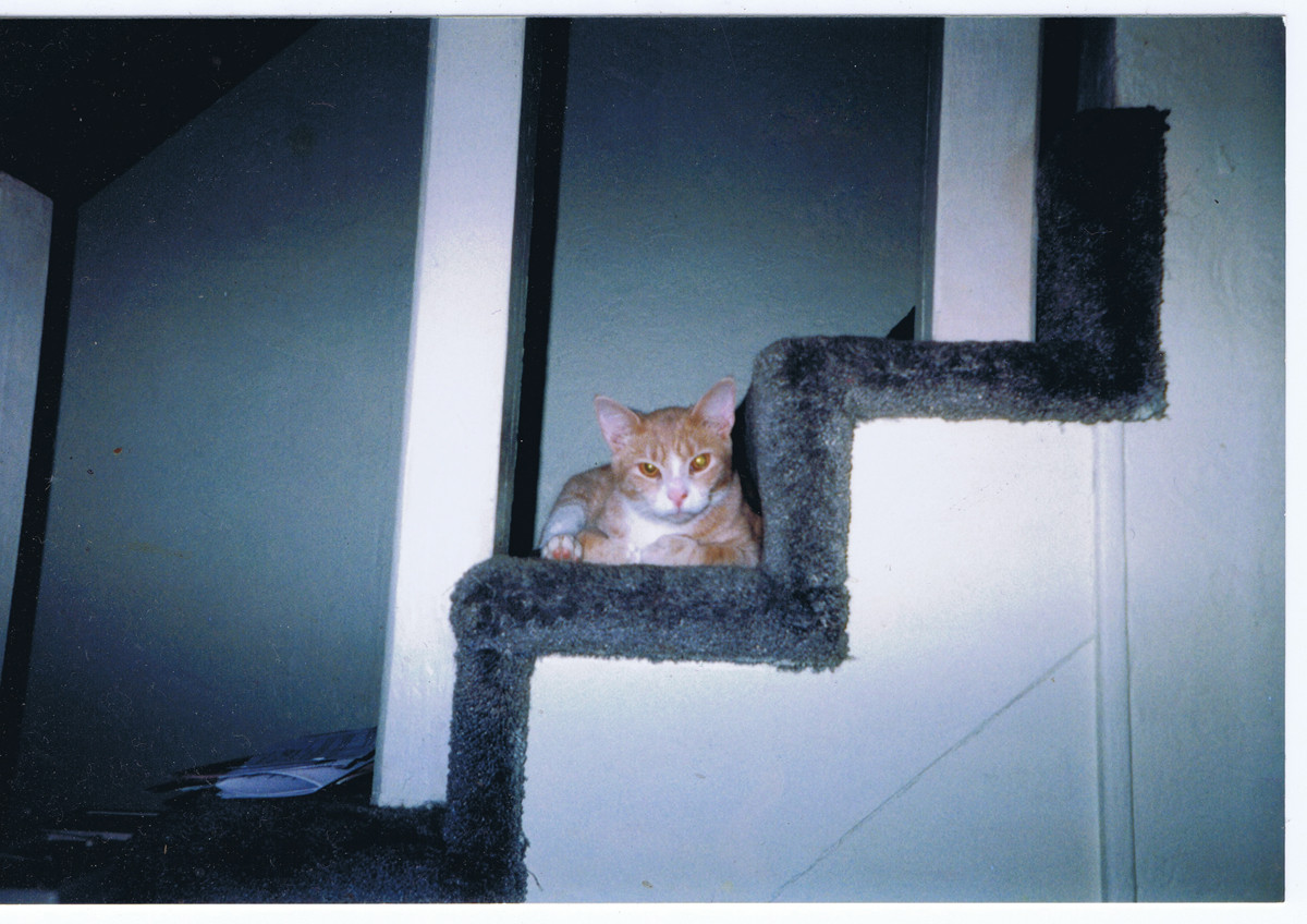 Twitch's second favorite perch in my old PA apartment.