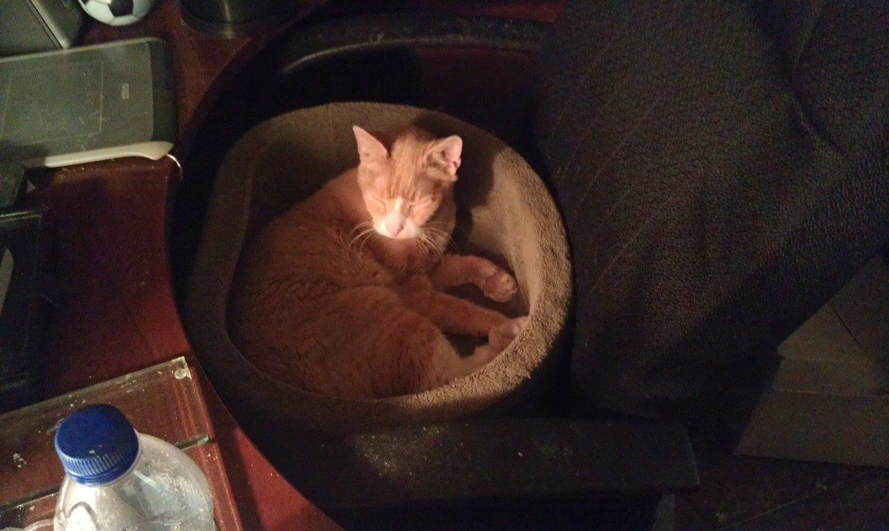 For the record, he hated the cat bed, until I tried to get rid of it. THEN IT WAS HIS FAVORITE.
