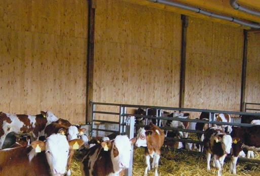 Handel mit IBR (Infektiöse bovine Thinotracheitis) freien oder geimpften Fressern aus eigenen Aufzuchtbetrieben.