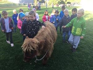 Inninger Grundschule, highland cattles, Projektunterricht, Tierpädagogik