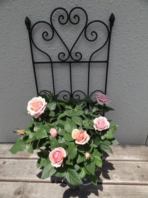 玄関で薔薇の花がお出迎え