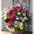 2012年 春の花のページへ