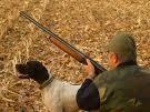 caccia vagante