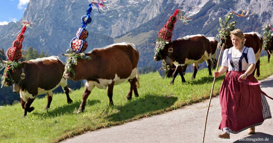 Almabtrieb Oberbayern, Almabtriebe Bayern, Almabtriebe Berchtesgadener Land, Almabtriebe Werdenfelser Land, Almabtriebe Oberbayernm, Almabtrieb Bayern, Almabtrieb und Tracht, Bayern, Oberbayern, Kühe mit Schmuck, Geschmücktes Vieh, Bayerische Alptradtion