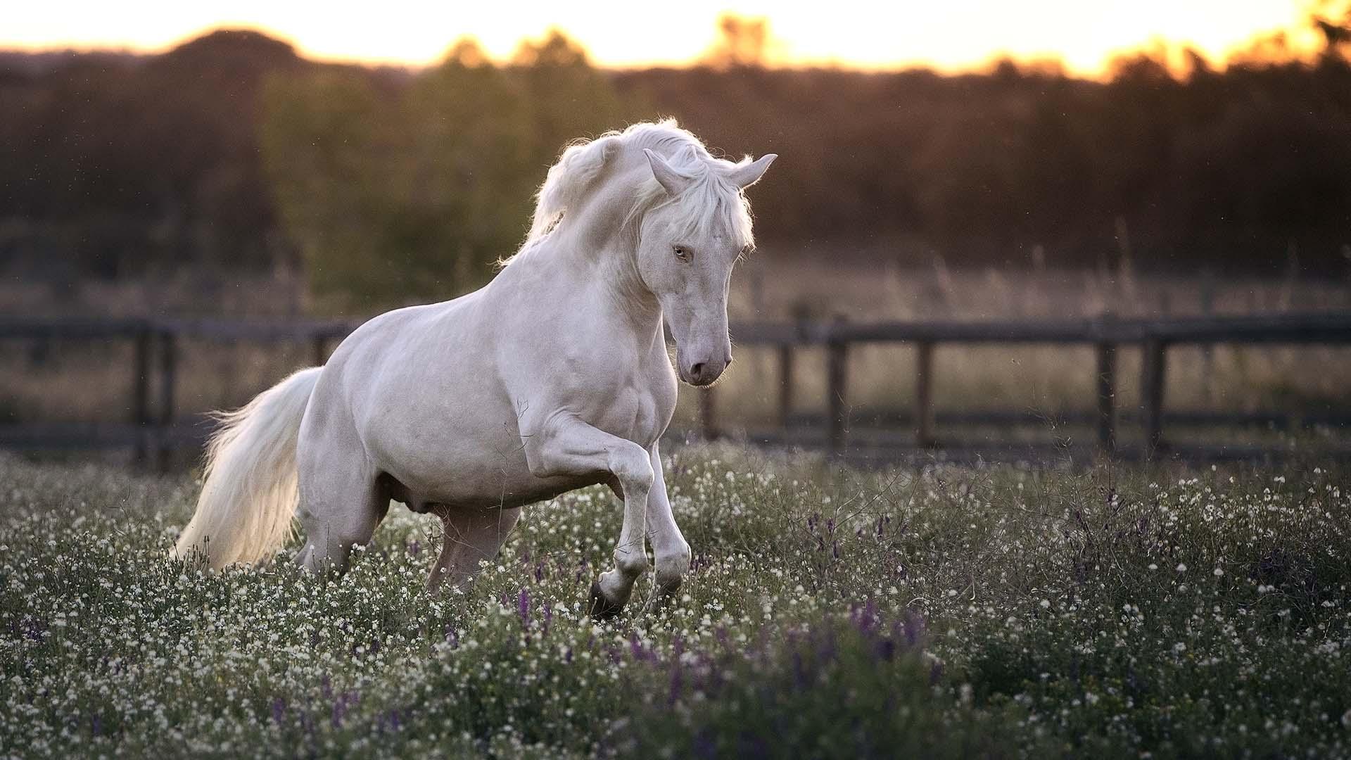 pferde richtig kennenlernen singlehotel rohrbach