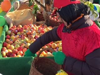über 3000 Äpfel beklebt und unter den Narren verteilt.