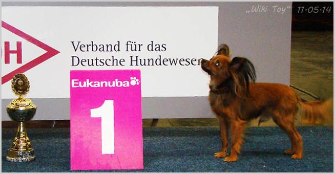 """Russkiy Toy """"Sher Dar Diamant"""". VDH-Europasieger-Ausstellung ( Dortmund 11.05.2014)"""