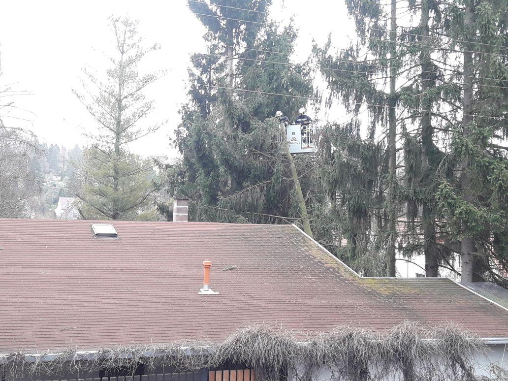 Ein Baum bei der Ruhlaerer Straße 42 drohte auf's Gebäude zu stürzen!