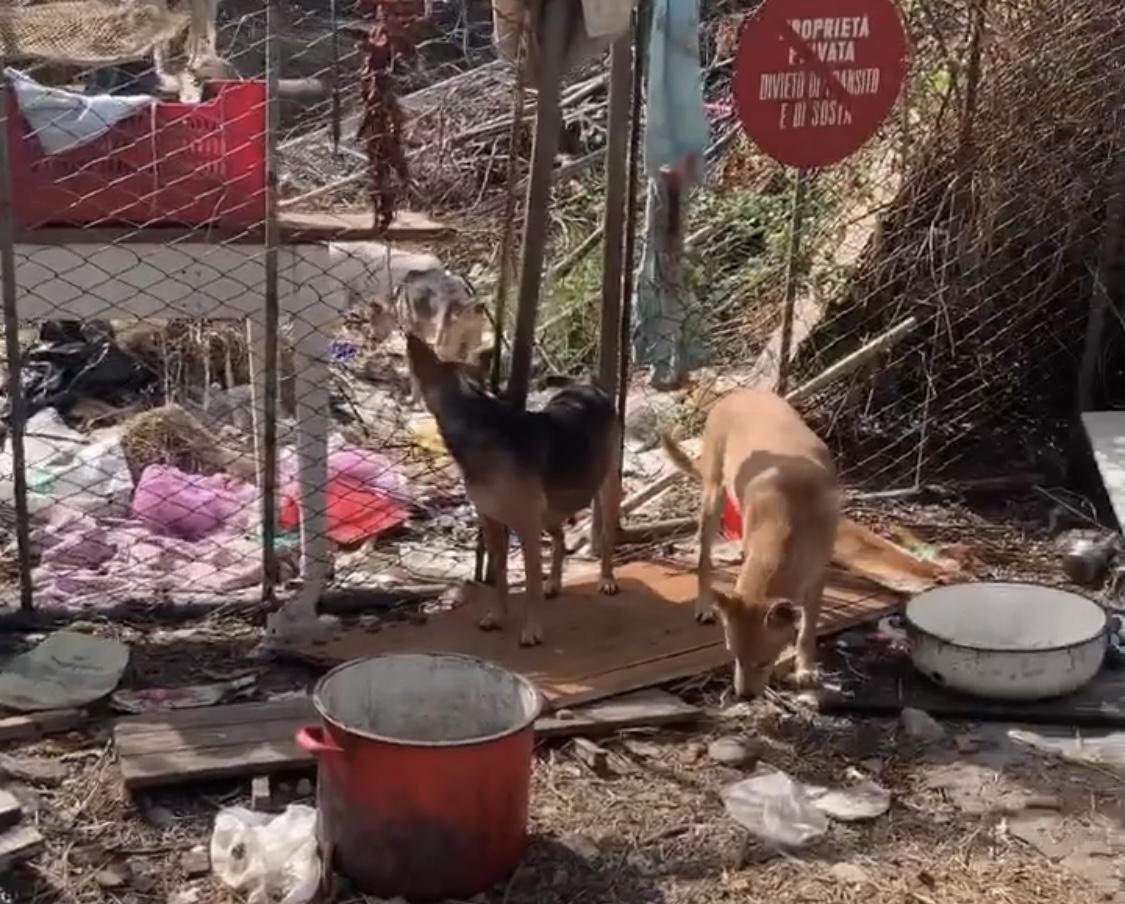 Wunderhunde in Not