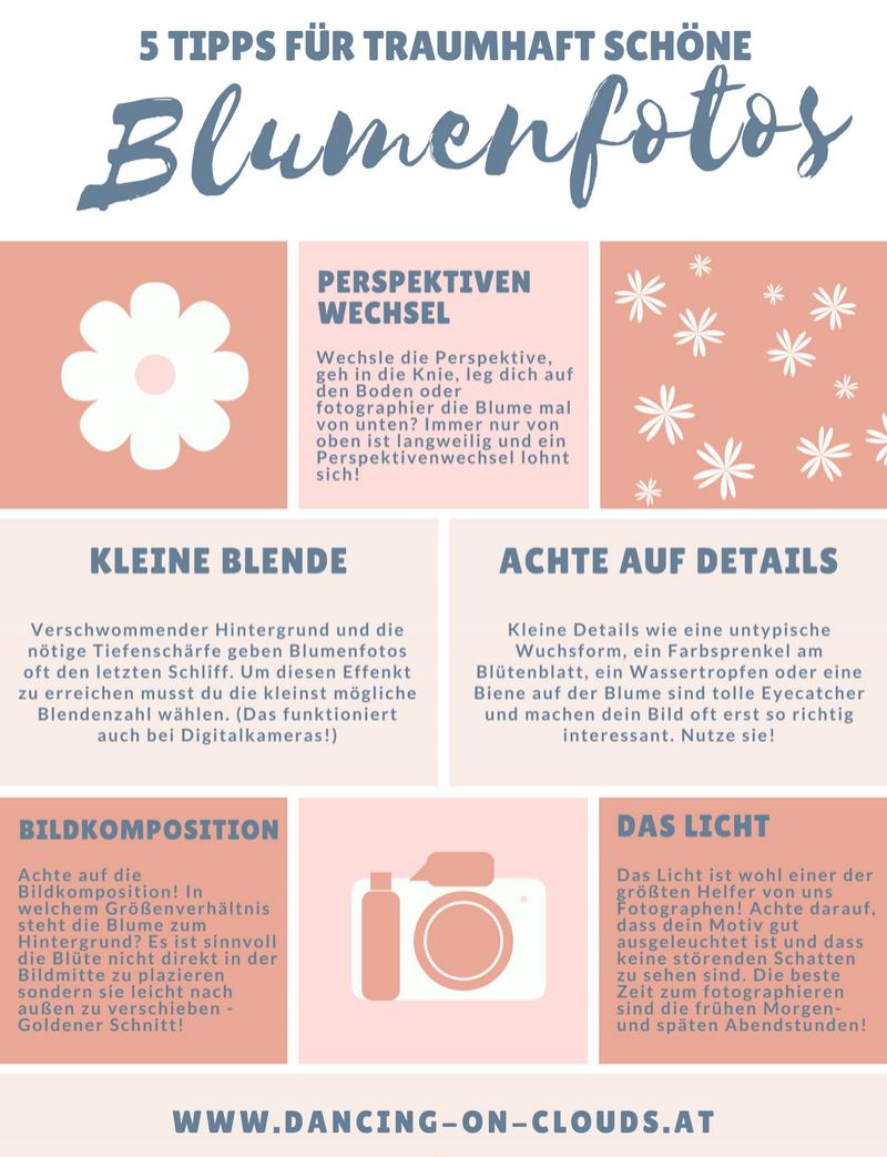 blumen-fotorgaphieren-tipps-für-blumenfotos-makrofotographie