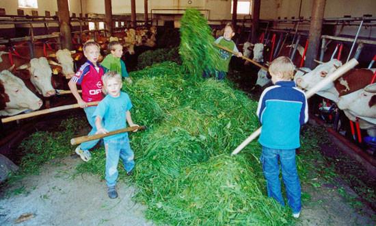 Die Kinder dürfen bei der Stallarbeit mithelfen